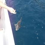 1-Gurcan ve Muzaffer - Kılavuz Balığı (2)
