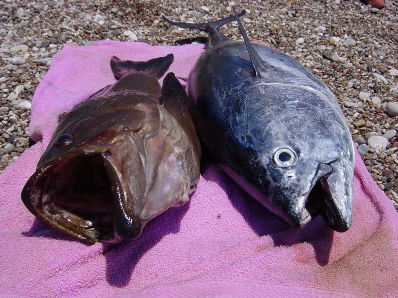 Adrasanın Önemli Balık Merası Olmasının Sebebi